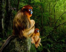 Oto najlepsze fotografie dzikiej przyrody tego roku!