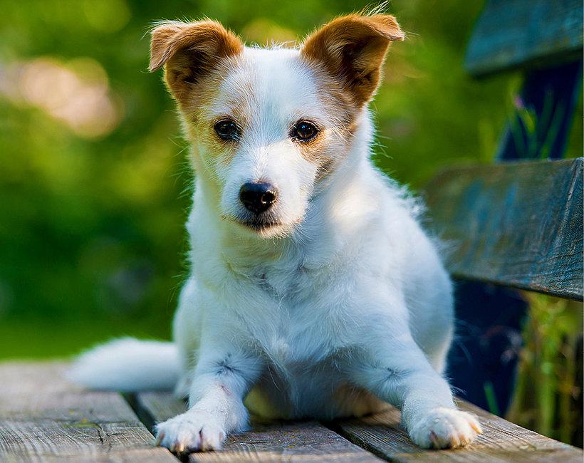 adopcja psów, pies, dzień kundelka