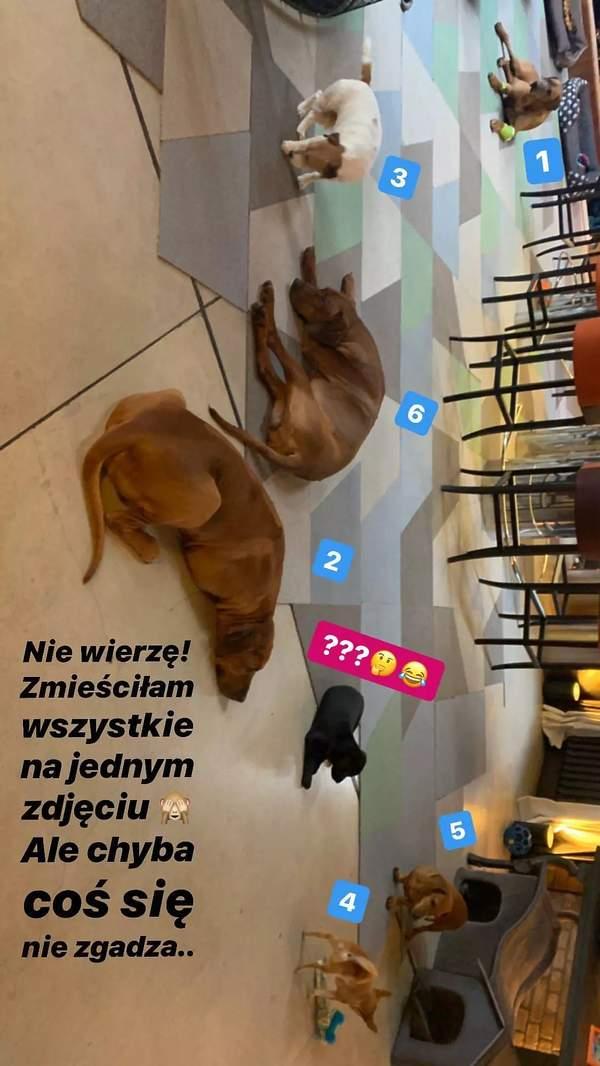 Agnieszka Woźniak-Starak, psy