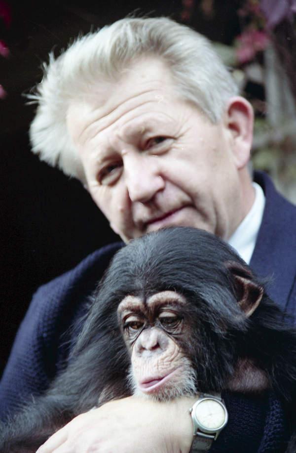 Antoni Gucwiński z szympansem