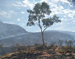 Australia: powodzie, pożary, śmierć zwierząt u kataklizmy