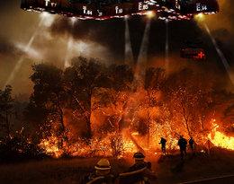Powodzie, pożary, masowy pomór zwierząt... Klęska żywiołowa w Australii!