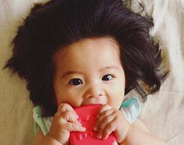 Ma siedem miesięcy i imponującą czuprynę! Baby Chanco to prawdziwa gwiazda sieci!