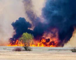 """""""Widzimy, że ginie przyroda"""". Płonie Biebrzański Park Narodowy"""