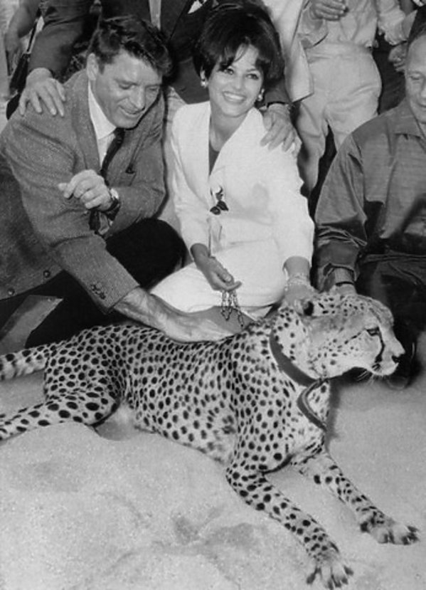 Claudia Cardinale w Cannes