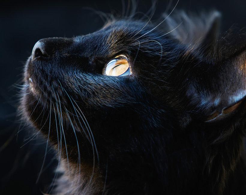 czarny kot, piątek 13-tego