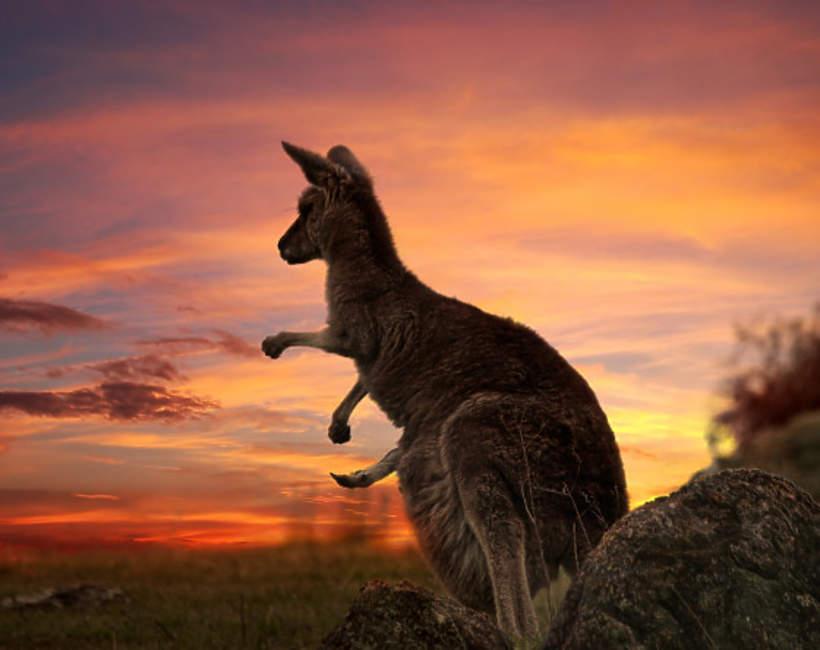 Dzień Australii Kangur 3