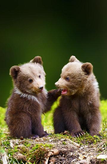 dzień niedźwiedzia
