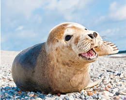Co za bestialstwo… Kto zabija foki nad Bałtykiem?