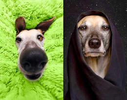 Te portrety psów rozbawią Was do łez!