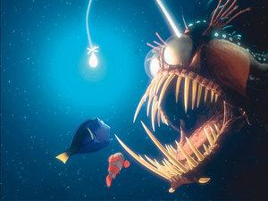 Gdzie jest Nemo. Kadr z filmu