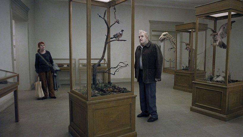 Gołąb przysiadł na gałęzi i rozmyśla o istnieniu