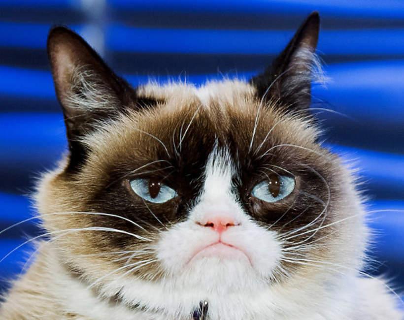 Grumpy Cat najpopularniejszy kot instagrama