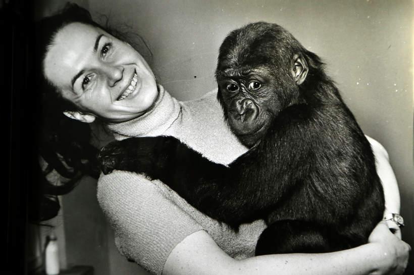 Hanna Gucwińska z szympansem