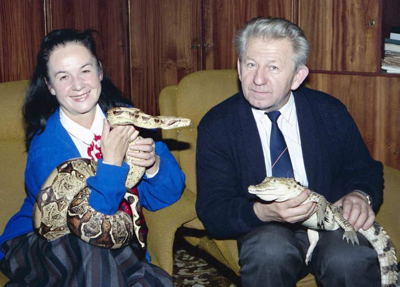 Hanna i Antoni Gucwińscy z wężem i krokodylem