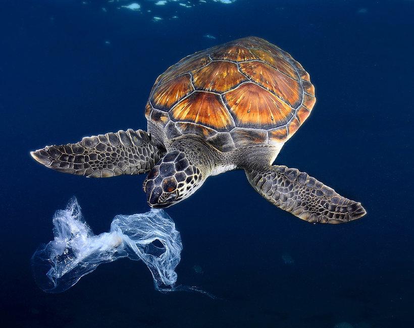 ile rozkłada się plastik