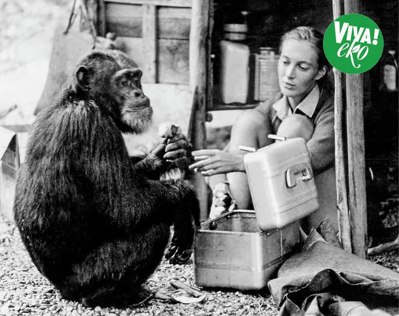 Jane Goodall, VIVA! Eko 18/2021