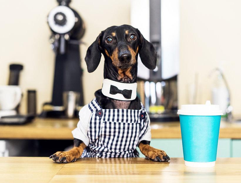 Kawa dla psów