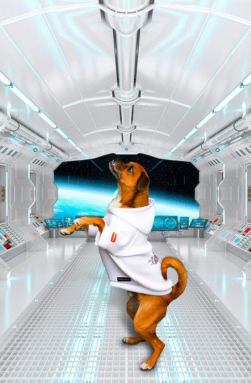kolekcja NASA X Heron Preston dla psów