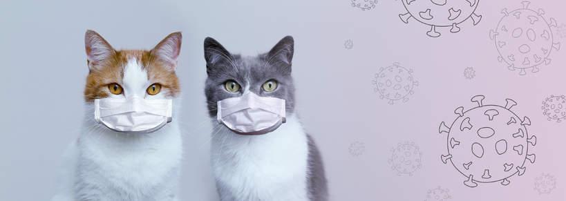 koronawirus, zwierzęta, koty