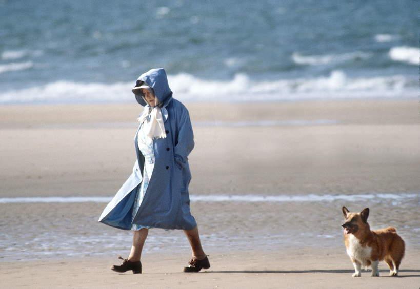 królowa Elżbieta II 2021 corgi