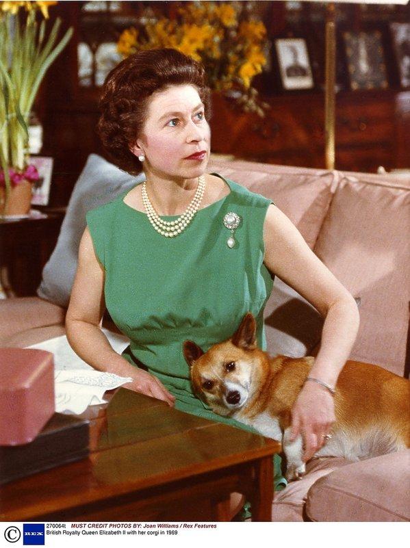 Królowa Elżbieta II z psami rasy corgi, psy królowej, pies królowej