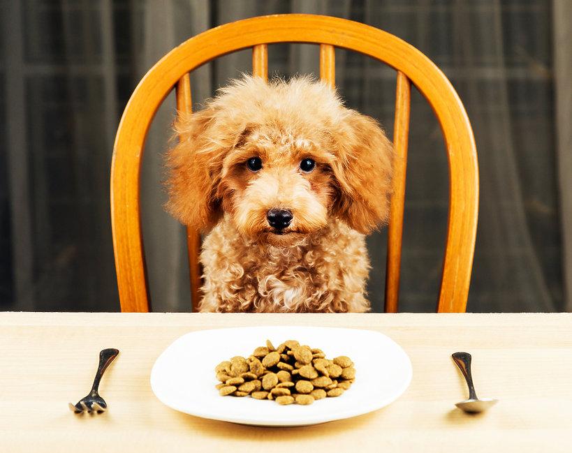 książka kucharska dla psów