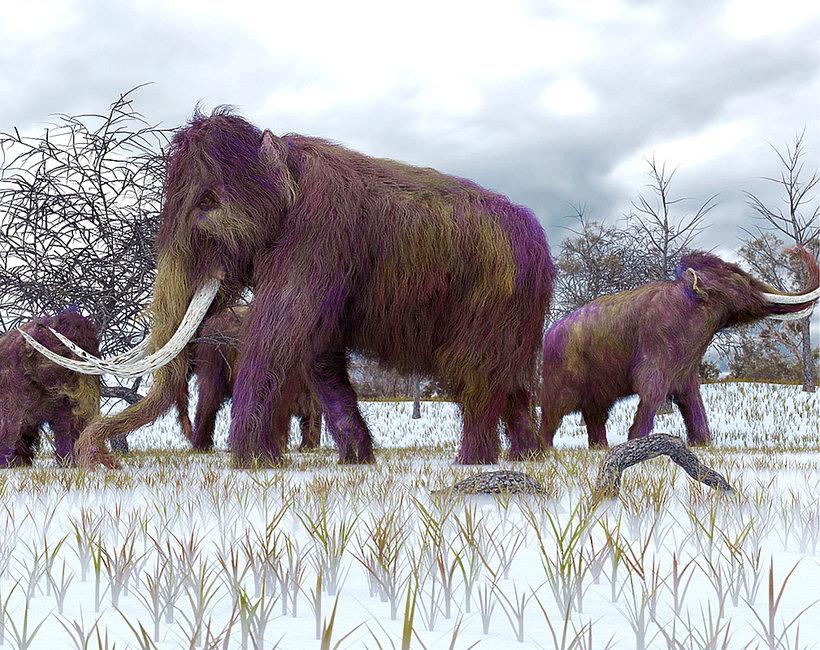 mamut w Warszawie