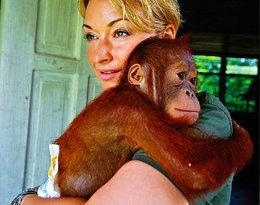 """Martyna Wojciechowska alarmuje: """"Orangutany są zagrożone krytycznie!"""""""