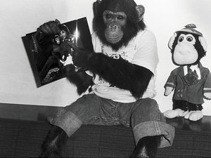 Michael Jackson szympans