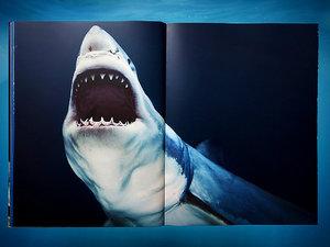 Michael Muller książka o rekinach