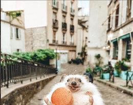 Mr.Pokee the Hedgehog