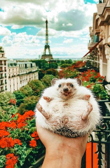 Mr.Pokee the Hedgehog