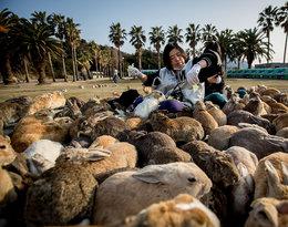 Okunoshima, wyspa królików