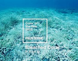 Pantone ogłosił kolor roku 2019, czym wywołał burzę w Internecie!