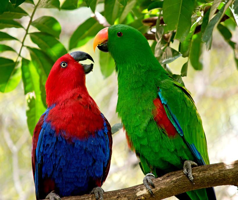 Papugi wyrzucone z zoo za przeklenstwa