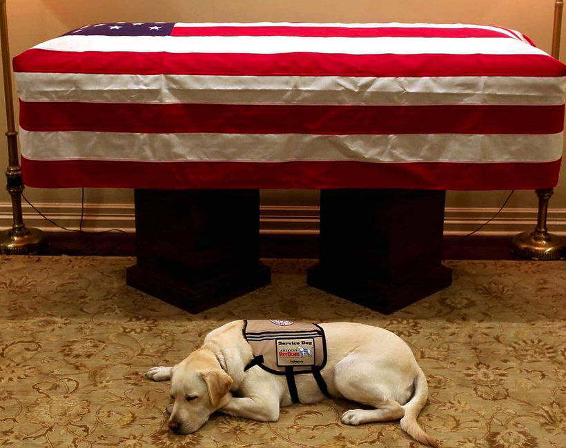 pies George Busha seniora czuwa przy jego trumnie