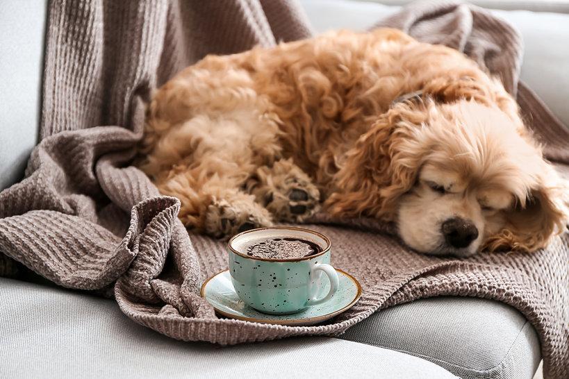 pies i kawa
