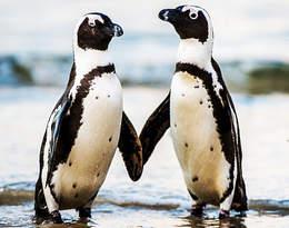 Przytulone mogą godzinami patrzeć w dal.... Zdjęcie pary pingwinów poruszyło świat!