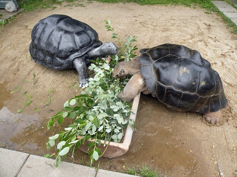 Poldi i Bibi, żółwie, które się rozwiodły