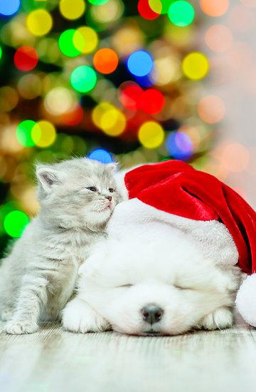 prezenty dla zwierzaków