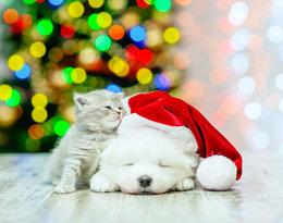 Kalendarze adwentowe z przysmakami dla zwierząt to absolutny hit tego roku!