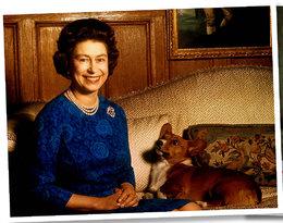 Zwierzęta u władzy, czyli kto naprawdę rządzi w Białym Domu, na Kremlu, w Pałacu Windsorskim i w Pałacu Prezydenckim! EKSKLUZYWNE VIDEO!