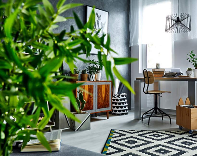 Rosliny antysmogowe w Twoim domu
