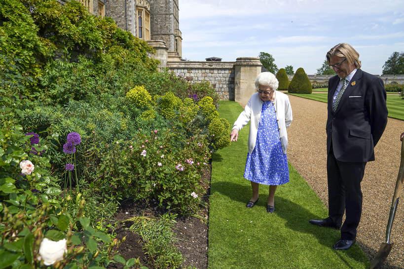 Róża księcia Filipa, królowa Elżbieta II
