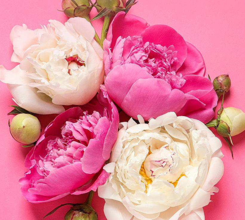 Różowe kwiaty 2019