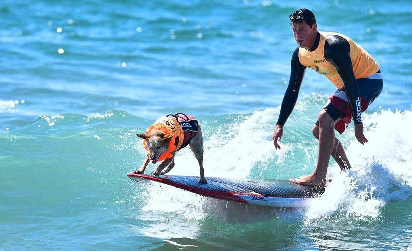 surfujace psy