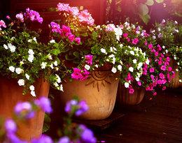 Zamień balkon w oazę zieleni! Oto 20 roślin, których nie może na nim zabraknąć!