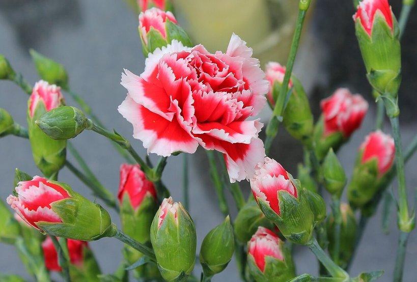 Kwiaty Na Balkon 20 Roślin Których Nie Może U Ciebie