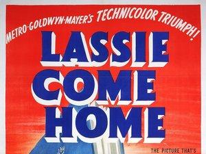 zdjęcie z filmu Lassie wróć